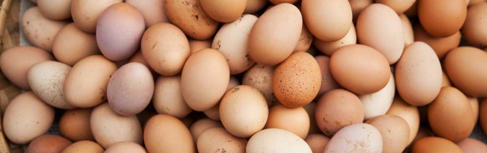 Why You Should Include Eggs In Your Diet